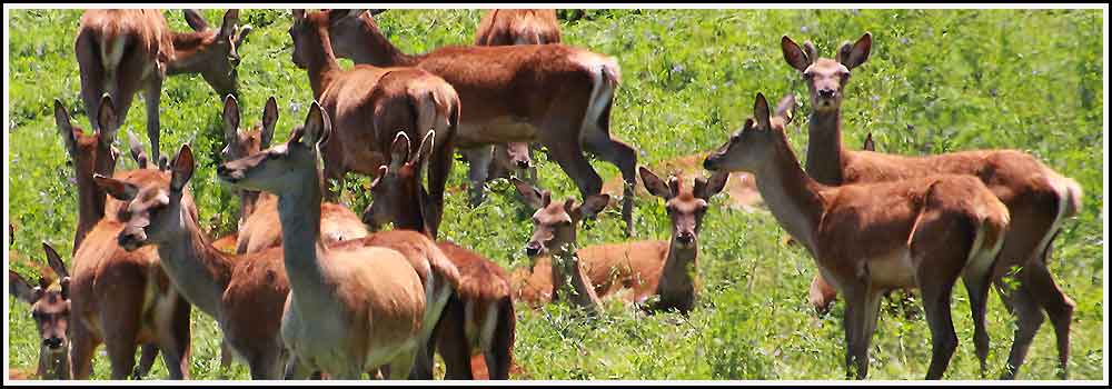 See deer farming on our tours with Hawkes Bay Scenic Tours